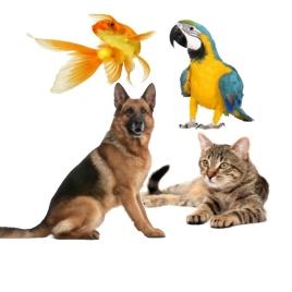 Evcil Hayvan Ürünleri